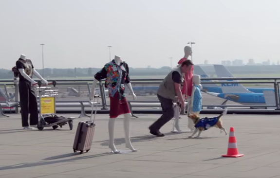 KLM airlines training dog video