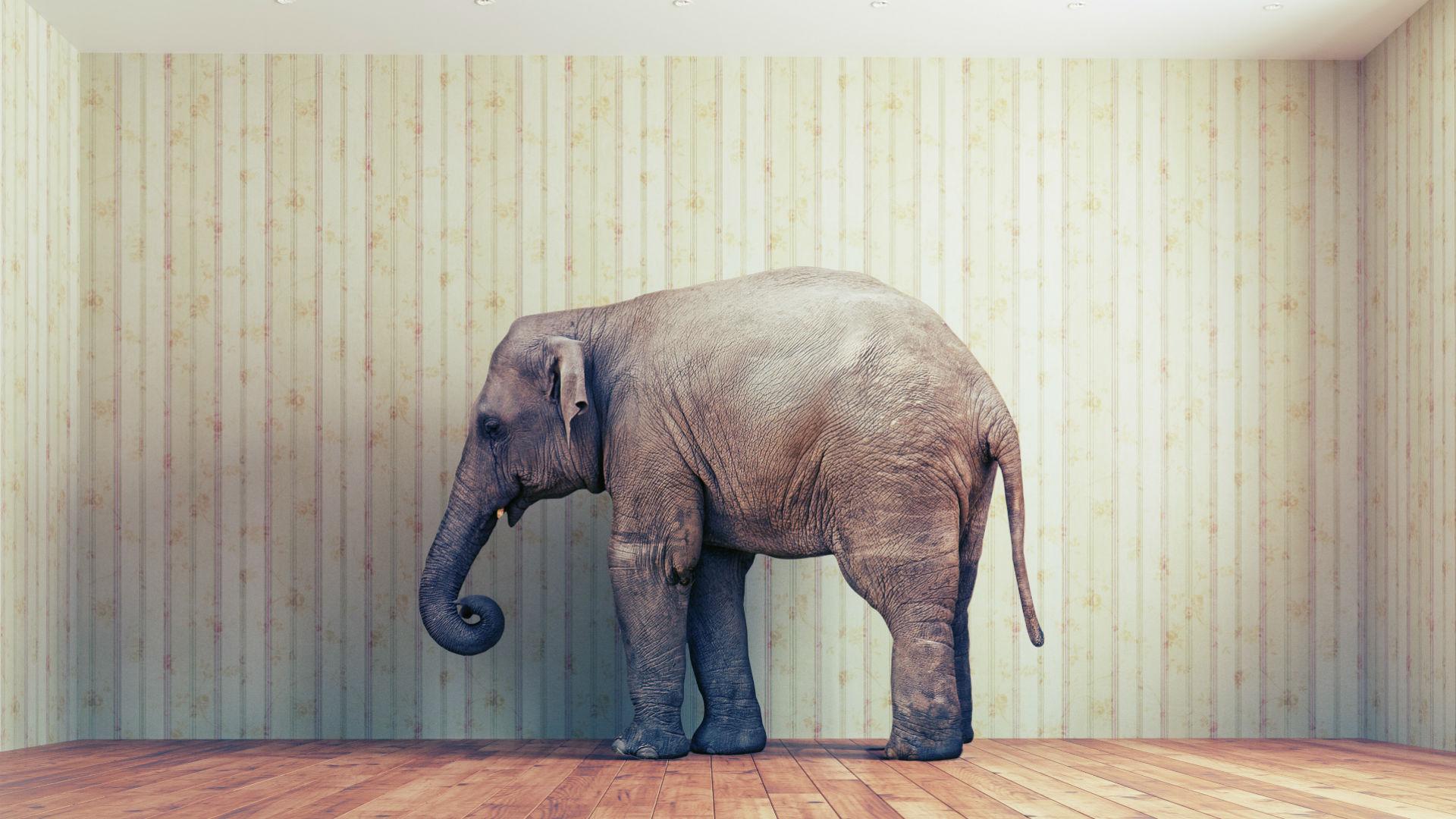3 Powerful Ways to Kick-Start Your ABM Program and Get More Big Elephants